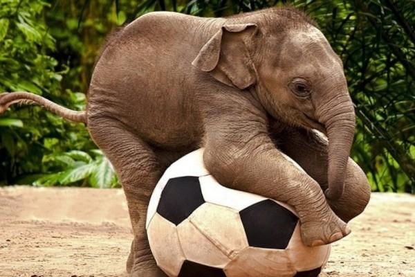 Η ζούγκλα και το ποδόσφαιρο... το ανέκδοτο της ημέρας (29/7)!