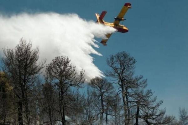 Εικόνες καταστροφής από την πυρκαγιά στους Αγίους Θεοδώρους! (Video)