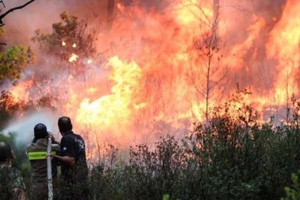 Φωτιά στον Εθνικό Δρυμό Οίτης!