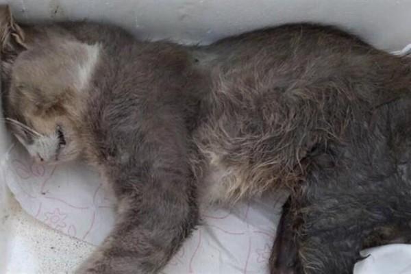 Λαμία: Πέθανε ο γάτος που πυροβολήθηκε από τον Λυκειάρχη!