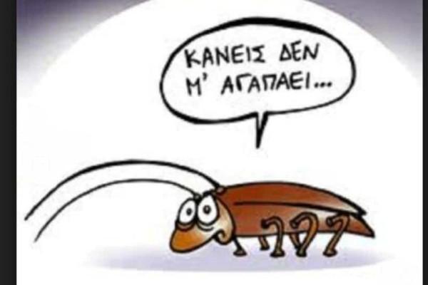 Φρίκη: Ούτε τα εντομοκτόνα δεν σταματούν πια τις κατσαρίδες!