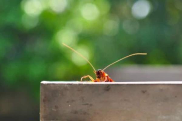 Πράγματα που δεν θα θέλατε να ξέρετε για τις κατσαρίδες!