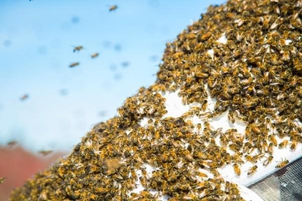 Αδιανόητο: Χιλιάδες μέλισσες επιτέθηκαν σε 70χρονο!