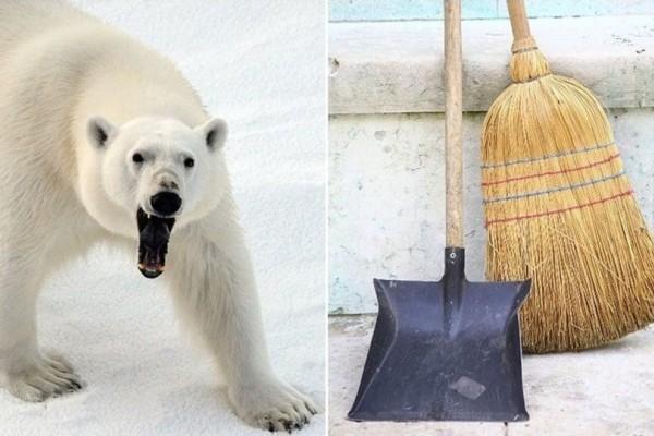 Σώθηκε από Πολική Αρκούδα με μια...σκούπα! (Video)