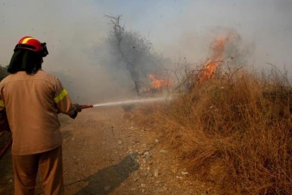 Πυρκαγιά στη Φθιώτιδα: Καίγεται δασική έκταση στο Μαρτίνο