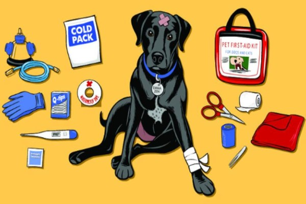 Αυτό είναι το σωστό κουτί πρώτων βοηθειών για τον σκύλο μας!
