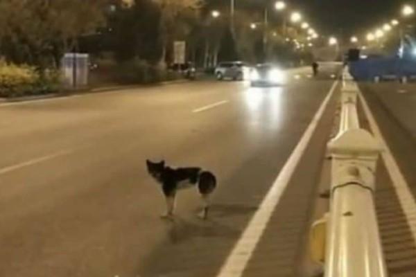 Σκύλος εδώ και 80 μέρες περιμένει στο σημείο που σκοτώθηκε το αφεντικό του!