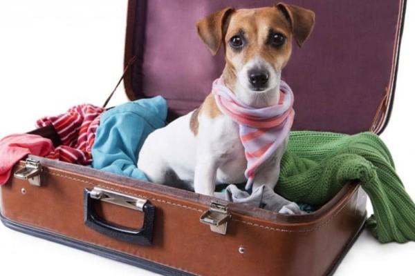 Θες να πας διακοπές και θες να πάρεις και το pet σου μαζί; Όλα όσα πρέπει να ξέρεις!