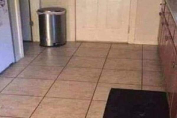 Το 96% των ανθρώπων δεν μπορεί να βρει τον σκύλο στην εικόνα και ούτε εσύ μπορείς!