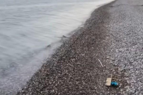 Σοκ στην Nαύπακτό: Εντοπίστηκε νεκρός στην παραλία!
