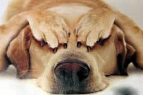 Απίστευτο: Ο σκύλος που δεν θέλει να ακούει την λέξη βόλτα!