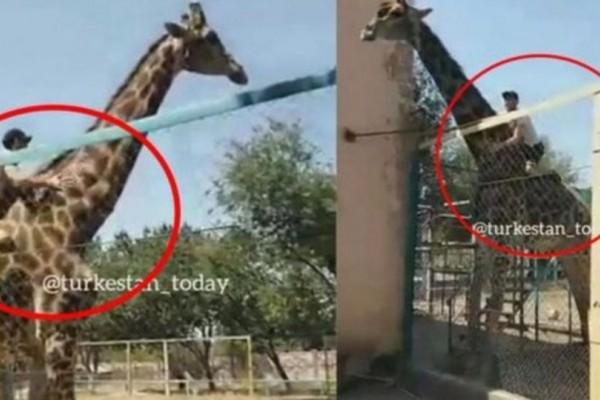 Απίστευτο: Πήδηξε πάνω σε καμηλοπάρδαλη για να κάνει βόλτα! (Video)