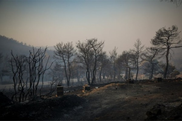 Φωτιά στην Εύβοια: Με εναέρια μέσα και ζώνες πυρασφάλειας η «μάχη» των πυροσβεστών (photos)