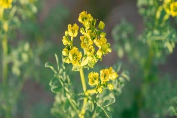 Το φυτό που διώχνει μακρυά την γλωσσοφαγιά και το έχετε σπίτι σας!