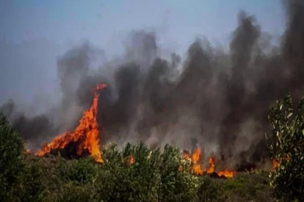 Μαίνεται η φωτιά στη Θήβα: Κινείται με μεγάλη ταχύτητα προς την ακτή!