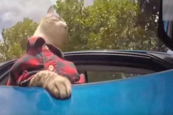 Όταν οι γάτες συμπεριφέρονται σαν άνθρωποι το αποτέλεσμα απλά είναι ξεκαρδιστικό! (Video)