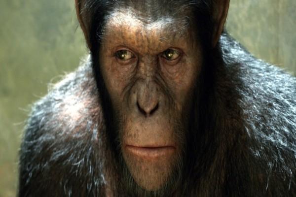 Επιστήμονες δημιούργησαν το πρώτο υβρίδιο ανθρώπου με πίθηκο! (Photo)