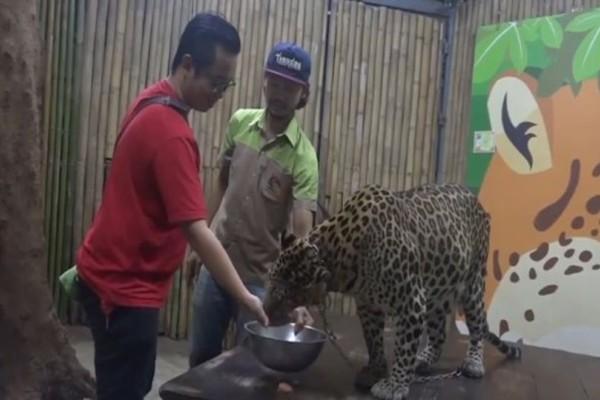 Σοκαριστικό video: Λεοπάρδαλη επιτίθεται σε 2χρονο παιδί!
