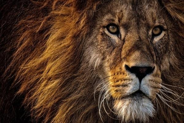 Σοκ: Μητέρα εξουδετέρωσε λιοντάρι και έσωσε τον 5χρονο γιο της!