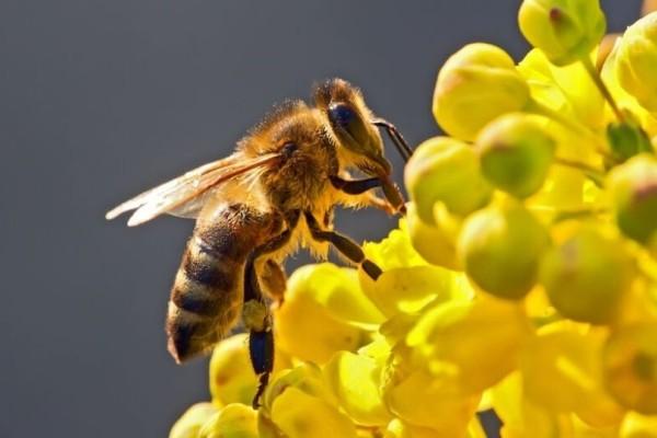 Δείτε τι πρέπει να κάνετε αν σας τσιμπήσει μέλισσα (Video)