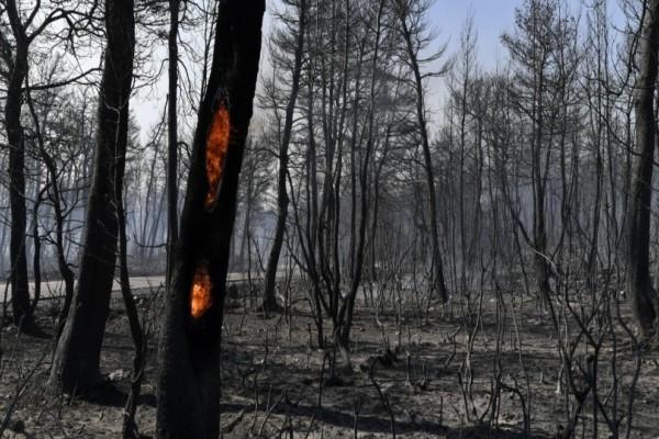 Μεσσηνία: Συνελήφθη ο εμπρηστής που έβαλε 10 φωτιές!