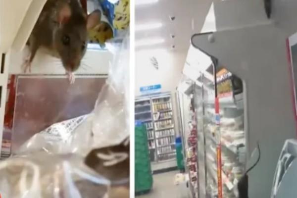 Σοκ: Ποντίκια γέμισαν τα ράφια σε ιαπωνικό σούπερ μάρκετ! (Video)