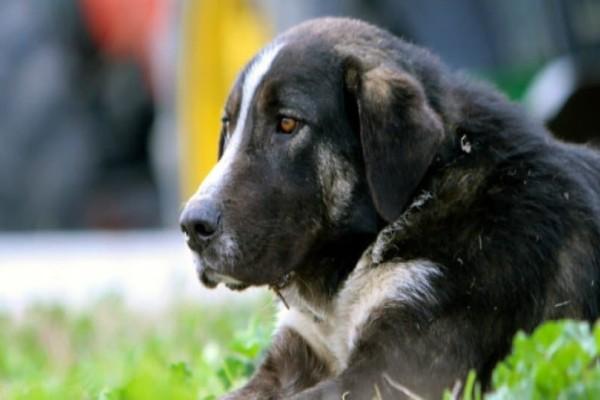 Κτηνωδία: Δηλητηρίασαν με φόλες σκύλους στην Κρήτη!