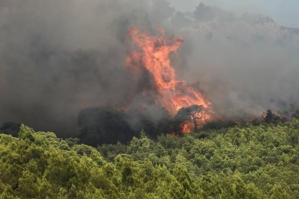 Ο δήμαρχος Ζακύνθου καταγγέλλει οργανωμένο κύκλωμα για τις πυρκαγιές!