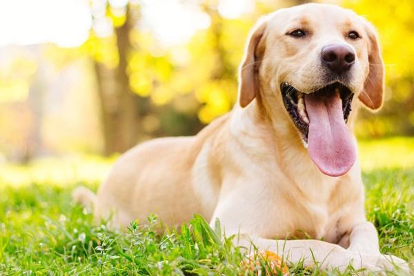 Φλώρινα: Τουλάχιστον 50 σκύλοι δηλητηριασμένοι από φόλες!