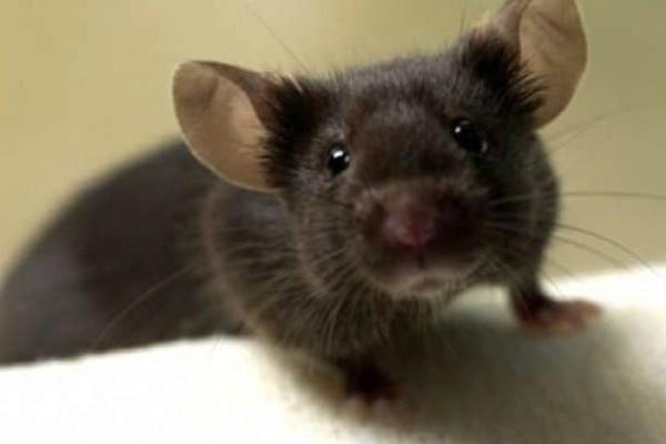 Κι όμως, τα ποντίκια παίζουν κρυφτό!