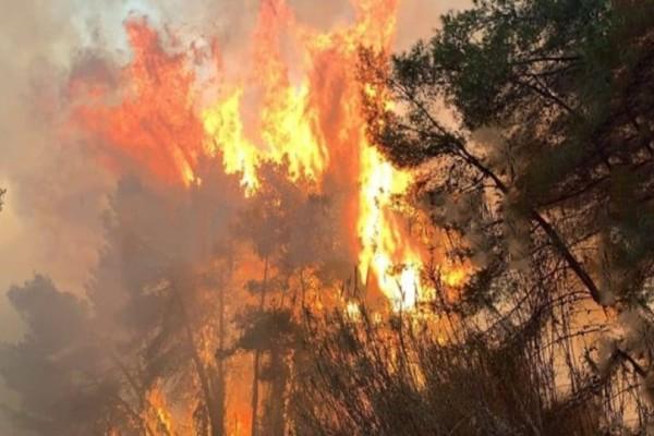Φωτιά ξέσπασε σε δασική έκταση στην Αχαΐα!