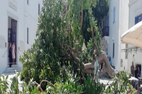Πανικός στην Πάρο: Δέντρο έπεσε στην είσοδο της Εκατονταπυλιανής και πλάκωσε άνθρωπο! (photos)