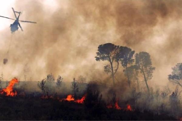 Βολιβία: Πάνω από 2 εκατομμύρια ζώα πέθαναν στις φονικές πυρκαγιές!