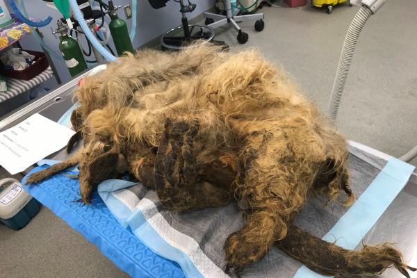 Απίστευτο makeover σε σκύλο! Δείτε πώς έγινε!
