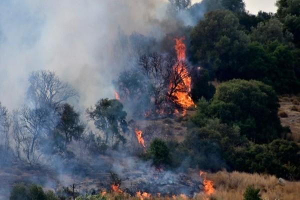 Καίγεται δασική έκταση στη Φαράκλα Εύβοιας!
