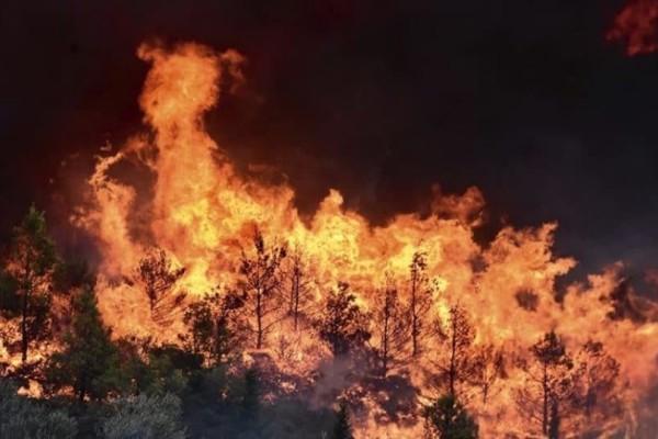 Φωτιά μαίνεται σε δασική περιοχή στην Κάρυστο! (Video)