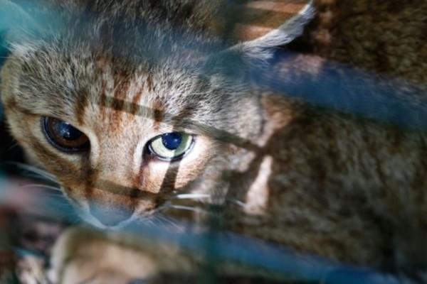 Απίστευτη βαρβαρότητα στην Εύβοια: Άνδρας χτύπησε μέχρι θανάτου γατάκι με ρόπαλο!