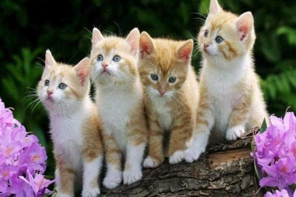 Το χειρότερο κατοικίδιο που μπορείς να έχεις είναι οι γάτες!