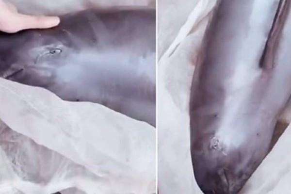 Τραγικό! Φώκια «κλαίει» την ώρα που οι άνθρωποι την πουλάνε για κρέας σε πάγκο λαϊκής στην Κίνα (Video)