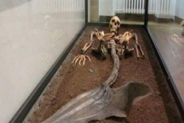 Προσοχή! Δεν κάνουμε πλάκα! Βρέθηκε σκελετός γοργόνας και σας τον παρουσιάζουμε! (Video)