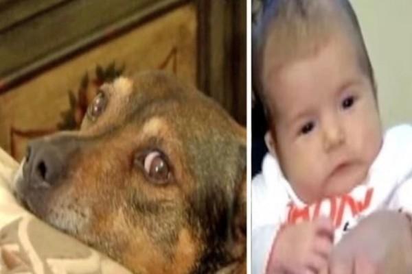 Σκυλί πηδάει ξαφνικά στο κρεβάτι της μητέρας και την οδηγεί στο μωρό της… Όταν δείτε γιατί θα συγκλονιστείτε! (Video)