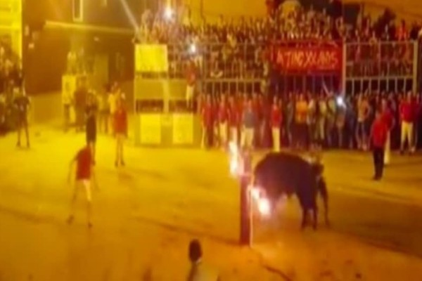 Τραγωδία: Ταύρος αποκεφάλισε άνδρα! (Video)