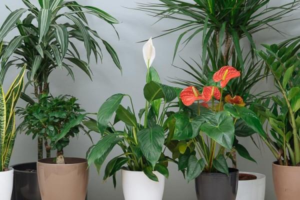 4+1 φυτά που θα φέρουν τύχη στο σπίτι σου!
