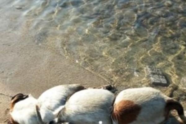 Κτηνωδία στον Βόλο: Έδεσε πέτρες σε σκύλο και τον πέταξε στη θάλασσα!