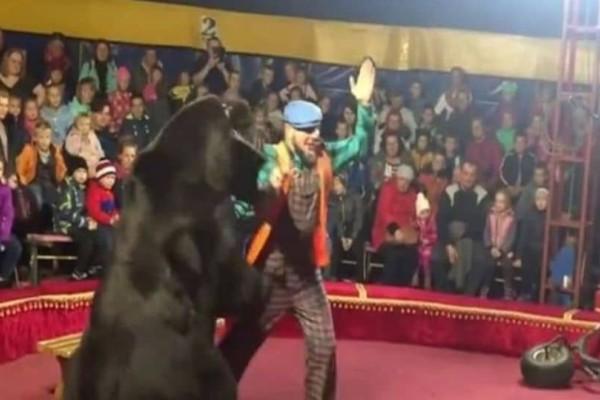 Τρόμος σε τσίρκο: Αρκούδα επιτέθηκε στον θηριοδαμαστή! (Video)