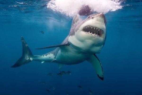 Σοκαριστικό: Καρχαρίας κατασπάραξε κολυμβητές! (Photos+ Video)