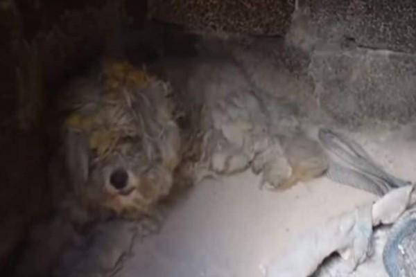 Θυμάστε το σκυλάκι που επέζησε μέσα σε φούρνο από την πυρκαγιά στο Μάτι; Δείτε που βρίσκεται σήμερα!