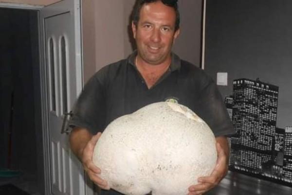 Απίστευτο: Ένα από τα πιο μεγάλα μανιτάρια 11 κιλών βρίσκεται στην Ελλάδα!