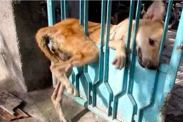 Αδέσποτη σκυλίτσα έχει κολλήσει στην πόρτα και κανείς δεν θέλει να την βοηθήσει – Προσέξτε τώρα ποιος έρχεται από τα δεξιά!