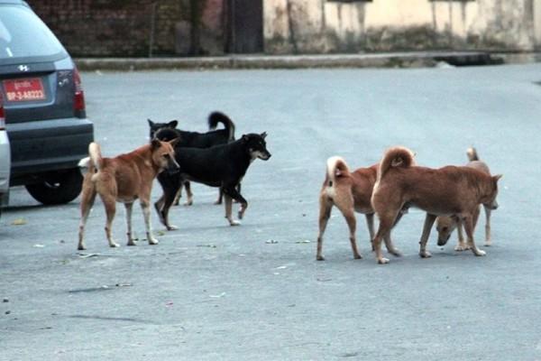 Επίθεση σκύλων στον Διόνυσο: Δυο σοβαρά τραυματίες!